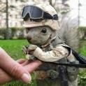 crazy_squirrel